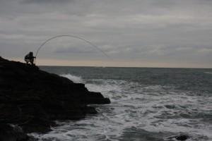 油戸磯で50センチの黒鯛を釣った。4間の庄内竿で・・・