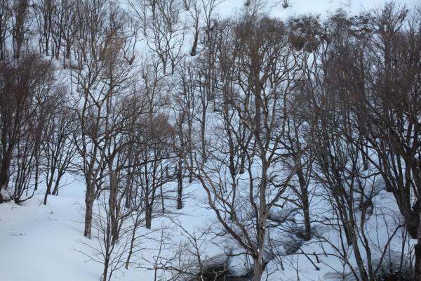 雪深い山に入るのは大変だが、それにもましてウサギ撃ちが楽しみだった。