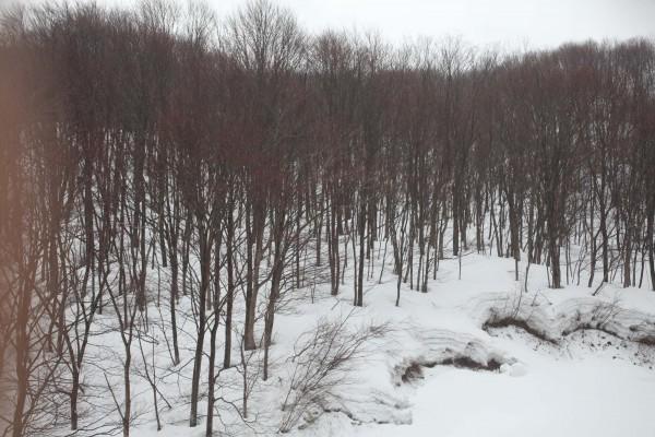 雪が深く積もっても、立木の周りは雪が融けて穴になっている。
