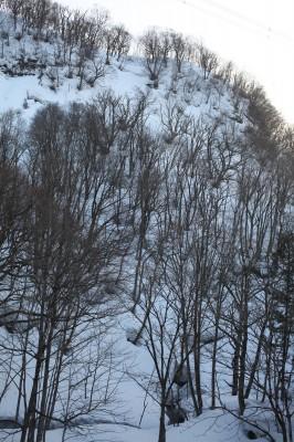 雪の積もる原生林。ここ歩くのは本当に骨が折れる。