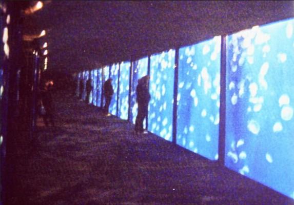 モントレー水族館のクラゲ水槽。はるか数10mまでも続く!?