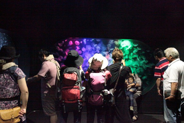加茂水族館は「クラゲ」をメインにここまでやってきたのだ。