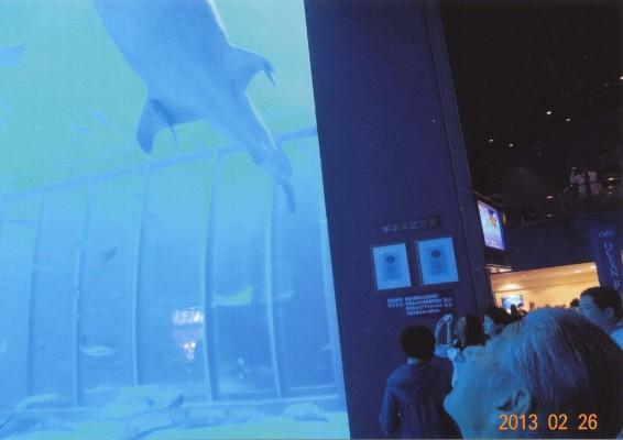 ジンベエザメを見上げ、立ち尽くす私。